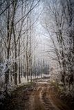 Winter Forest Trail. Winter alley running between the frozen trees. Snowy road Royalty Free Stock Photography