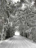 Winter alley with snow-covered trees Stock Photos