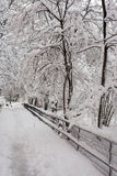 Winter alley with snow covered trees Stock Image