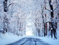 Winter alley with snow covered trees Stock Photos