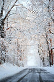 Winter alley with snow covered trees. Stock Image