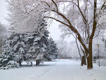 Winter alley. Snowbound walkway through the trees in the city park covered with frost snow Stock Photo