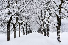 Winter alley. Snowy winter alley in a forest Stock Images