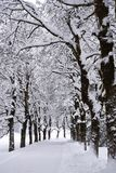 Winter alley stock images