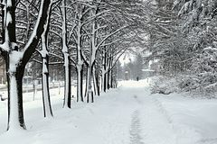 Winter alley of tree. Snow on the way in the alley in the city Royalty Free Stock Photo