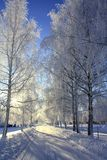 Winter alley of trees. The photo is taken on a very cold an beautiful winter day in Norway Royalty Free Stock Photography
