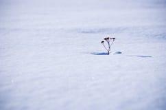 Winter alone Stock Image