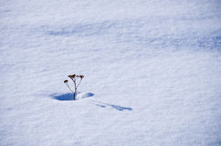 Winter alone Stock Image