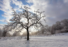 Winter alone tree Stock Images