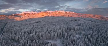 Winter alpine forest at Pokljuka Slovenia covered in snow at dawn royalty free stock photography