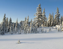 Winter alpine meadow Royalty Free Stock Photo