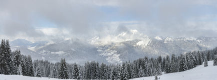 Winter Alpine panorama firs forest with snowfall. In France Stock Photo