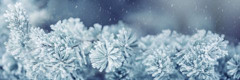 Winter And Christmas Border. Pine Tree Branches Covered Frost In Snowy Atmosphere