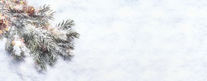 Free Winter And Christmas Snow Background. Branch Of Fir With Cones Is Covered With Snow. Top View. Copy Space. Bokeh. Banner Royalty Free Stock Photo - 164201515
