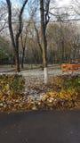 Winter-Anfang Lizenzfreie Stockfotos