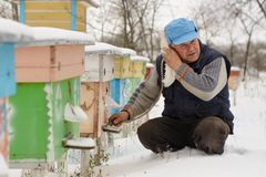 Winter on the apiary. Beekeeper winter monitors the status of bees in the hive. Winter bees in the hives in the yard. stock photos