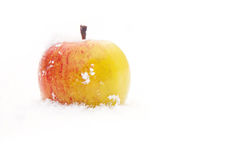 Winter apple Royalty Free Stock Photography