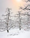 Winter-Apple-Obstgarten-Michigan-Schneefälle Lizenzfreie Stockfotografie