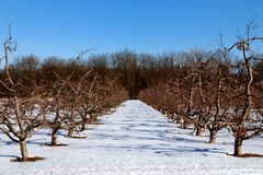 Winter Apple Orchard. Late afternoon shadow made a creative ground pattern for the Southern Michigan winter apple orchard perspective Stock Images