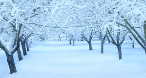 Winter apple tree  garden Royalty Free Stock Photos