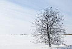 Winter apple tree Royalty Free Stock Images