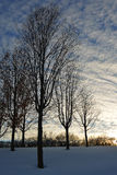 Winter at the Arboretum. Dramatic winter sunset and sky Royalty Free Stock Photos
