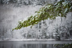 Winter arrives gingerly. Stock Photos