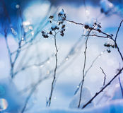 Winter art design. Snow Stock Images