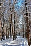 Winter art Stock Images
