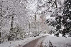 Winter Park in Dusseldorf Stock Photography