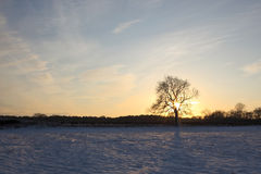 Winter ash tree with snow Stock Photography