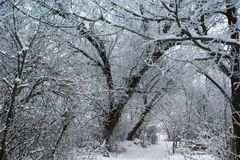 The winter asleep forest keeps the secrets. The winter asleep forest keeps the secrets to arrival of spring Stock Image