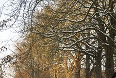 Winter atmosphere. Snow-covered nature in countryside during long winter Stock Photography