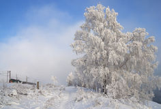 In winter attire Royalty Free Stock Photography
