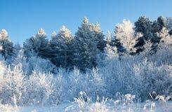 Winter auf dem Durchlauf Lizenzfreies Stockbild