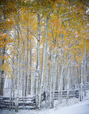 Winter and Autumn Collide in Colorado. An Autumn snow blankets the ground, fences and trees along a mountain road in Colorado Stock Images