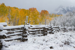 Winter and Autumn Collide in Colorado. Snow falls in the middle of Autumn in the San Juan Mountains of Colorado Stock Photo