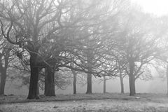 Winter Autumn Fall foggy landscape of forest Stock Images