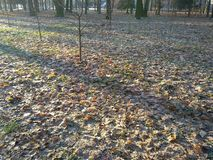 Winter and autumn in the park met. royalty free stock image