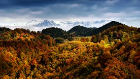 Winter and autumn scene in Romania , beautiful landscape of wild Carpathian mountains. Winter and autumn scene in Romania, white frost over autumn trees royalty free stock photography