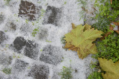 Winter and autumn specific Stock Image