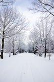 Winter avenue Stock Photos