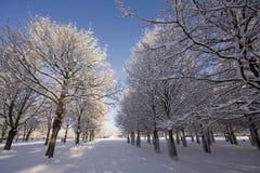 Winter avenue Stock Photo
