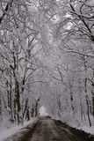 Winter avenue. Avenue from trees in snow-covered park Stock Photos