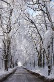 Winter avenue. Avenue from trees in snow-covered park Royalty Free Stock Images