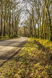 Landscape, Winter, Beech trees, Avenue, Single track road Stock Photos