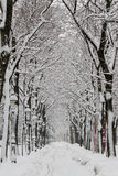 Winter avenue Stock Image