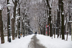 Winter avenue Royalty Free Stock Photography
