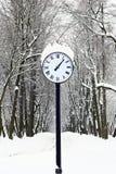 winter.Avenue parkowe godziny. Zdjęcie Royalty Free