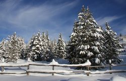 Winter-Bäume stockbilder